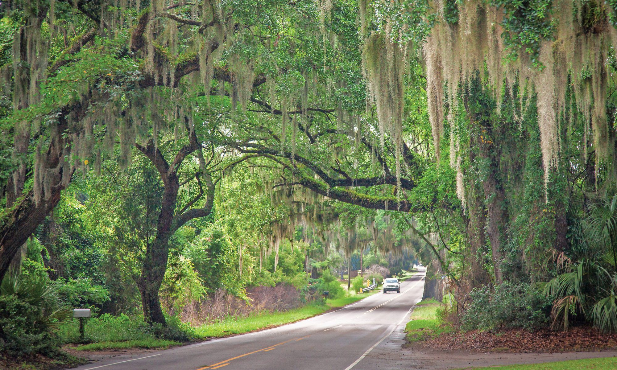 Spanish Moss, Live Oaks, Country Road